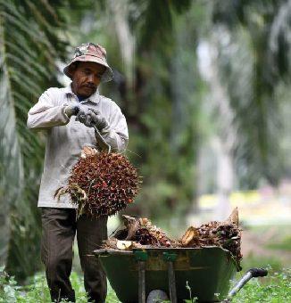 Cara Menarik Tenaga Kerja   Untuk Sektor Perkebunan