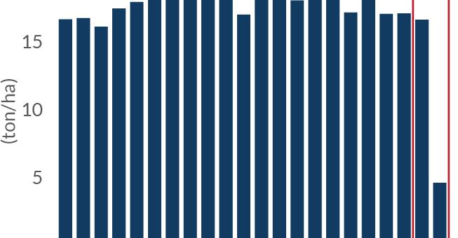 Dampak Replanting terhadap Produktivitas dan Harga CPO